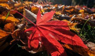 Der Hitze-Herbst ist vorbei: Jetzt übernehmen Frost und Nebel das Wetter-Ruder. (Foto)