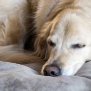 Genitalien zerstört! Hund abgestochen undzu Tode vergewaltigt (Foto)