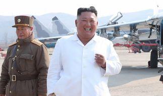 Will Kim Jong-un Delfine als schwimmende Soldaten einsetzen? (Foto)