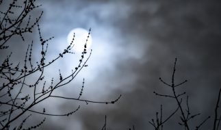 Der November-Vollmond taucht in den Halbschatten der Erde ein. (Foto)