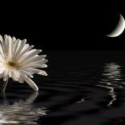 Am Wochenende wandert der Mond durch den exzentrischen Wassermann.