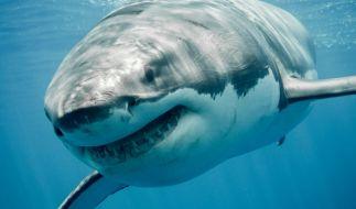 Ein 50-jähriger Australier ist am Wochenende bei einem Haiangriff ums Leben gekommen. (Foto)