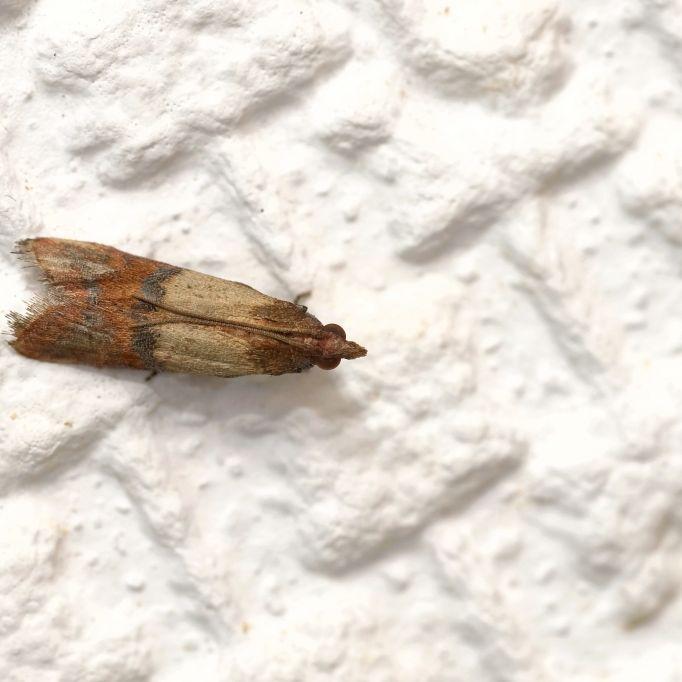 Ekel-Fund im Vorratsschrank! So gefährlich sind Motten, Milben und Co. wirklich (Foto)