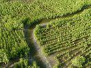 """""""Geheimnisvolle Mangroven"""" vom Mittwoch"""