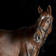 Schlimmer Sturz! Totes Pferd erschüttert deutsche Reit-Meisterschaft (Foto)