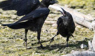 Sind die Vögel die Vorboten der Apokalypse? (Foto)