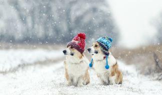 Dürfen wir uns im Januar auf Winter-Wetter freuen? (Foto)