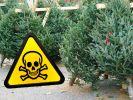Weihnachtsbäume im Test