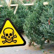 Mit Pestiziden verseucht! Finger weg von DIESEN Weihnachtsbäumen (Foto)