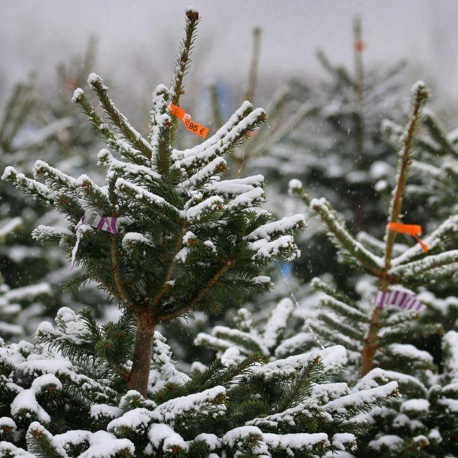 Wetter-Prognose steht! HIER droht Schneebombe zum Fest (Foto)