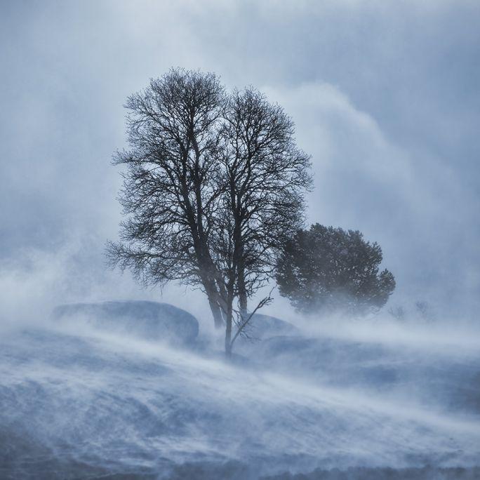 Schnee-Monster an Weihnachten? Meteorologen befürchten Mega-Orkan (Foto)