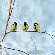 Bis zu 30 Zentimeter! HIER warnt der Wetterdienst vor Schneefall (Foto)