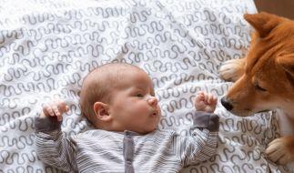 Ein vier Monate junges Baby kam in Ohio auf tragische Weise durch den Familienhund zu Tode. (Foto)
