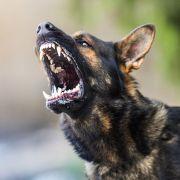 Während Eltern feierten! Junge (11) von Hunden tot gebissen (Foto)