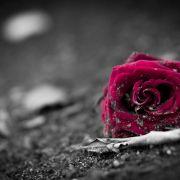 Sie war erst 21! Schönheitskönigin leblos aufgefunden (Foto)