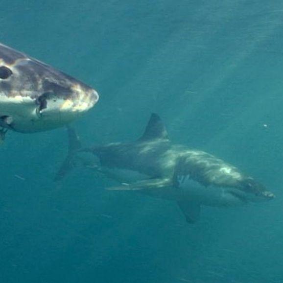 Tod am Traumstrand! Junge Frau von Hai zu Tode gebissen (Foto)