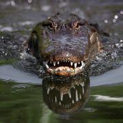 DARUM überlebten Krokodile den Asteroideneinschlag - und Dinosaurier nicht! (Foto)