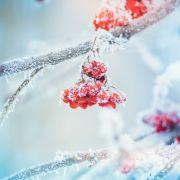 Minus 15 Grad! Meteorologen warnen vor arktischen Nächten (Foto)