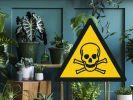 Einige Zimmerpflanzen können allergische Reaktionen oder sogar Vergiftungserscheinungen hervorrufen. (Foto)
