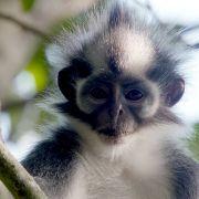 Wiederholung der Wildlifereportage im TV und online (Foto)