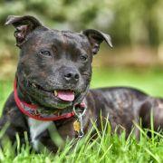 Im Garten entsorgt! Besitzer lassen Hund qualvoll sterben (Foto)