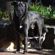 Ein Sechsjähriger stellte sich mutig einem Hunde-Angriff entgegen.