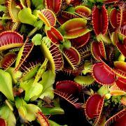 Grusel-Alarm! DIESE Pflanzen sind der blanke Horror (Foto)