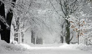 Ein seltenes Winter-Phänomen sorgte im US-Bundesstaat Vermont für Aufruhr. (Foto)