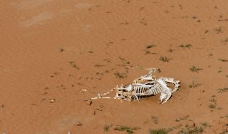 Das Opfer wurde getötet, verbrannt und anschließend im Wüstensand verscharrt. (Symbolbild) (Foto)