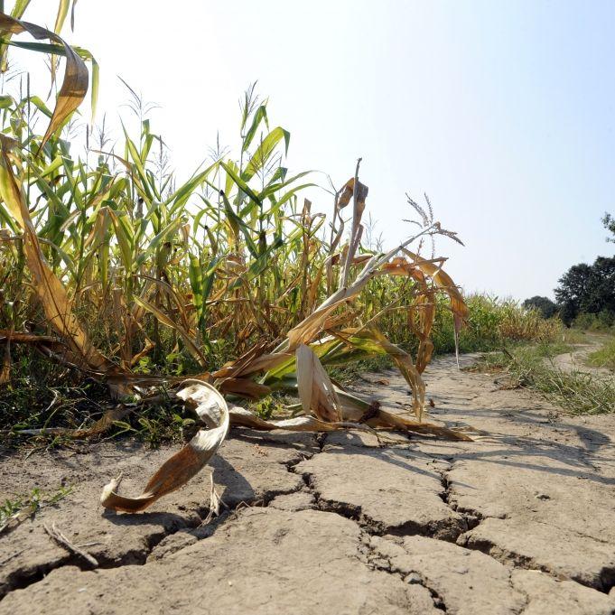 Überdurchschnittliche Temperaturen! Droht uns erneut ein Hitze-Sommer? (Foto)