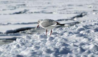 Am Wochenende drohen Norddeutschland gewaltige Schneemassen. (Foto)