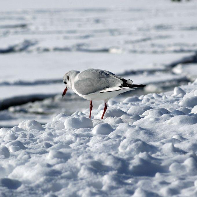 60 Zentimeter Neuschnee möglich! Meteorologen warnen vor Schnee-Horror (Foto)