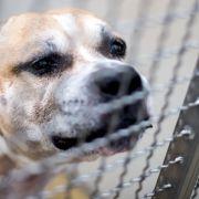 Sie wurde nur 25 Jahre alt! Familienhund zerfleischt Besitzerin (Foto)