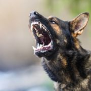Im Gesicht verbissen! Hund zerfleischt Mädchen auf offener Straße (Foto)