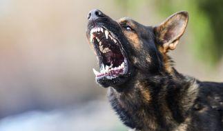 Ein aggressiver Hund hat in Birmingham zwei Mädchen attackiert. (Symbolfoto) (Foto)