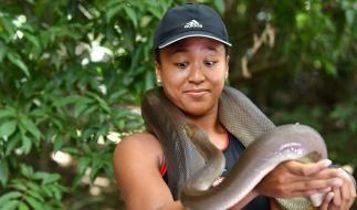 Glücksbringer? Vor einem internationalen Tennisturnier in Brisbane bekommt Naomi Osaka 2018 eine 274 cm lange Olivenpython um den Hals gelegt. (Foto)