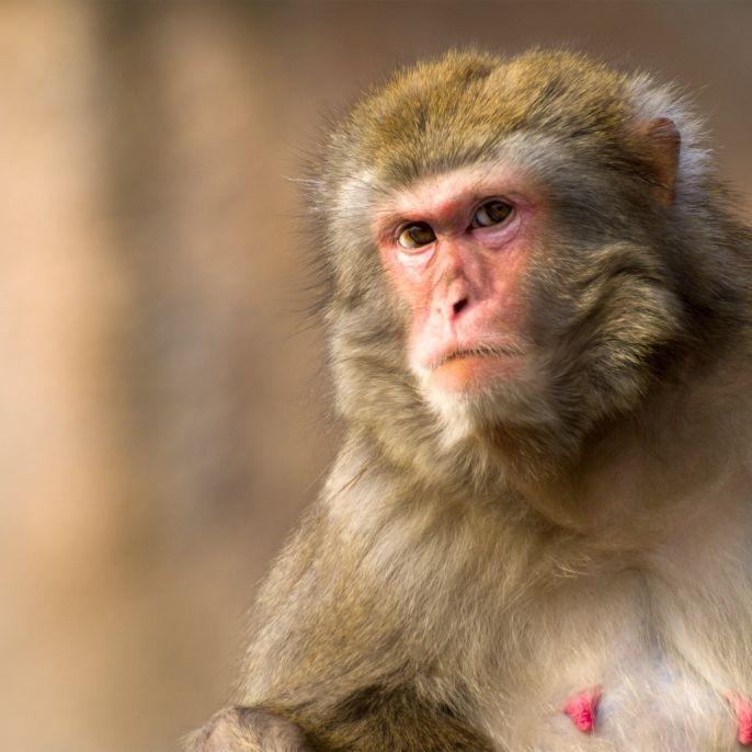 Affen entführen und töten 8 Tage altes Baby (Foto)