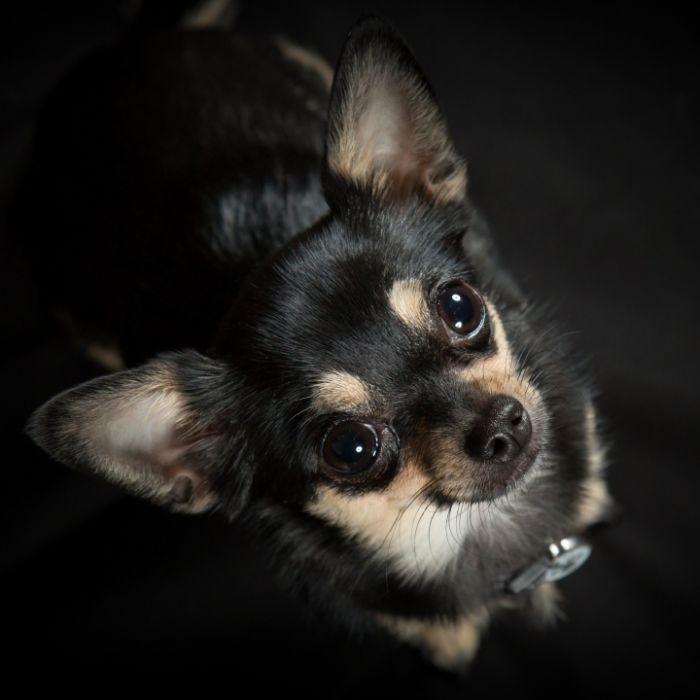 Verstörendes Video! Jugendlicherschlitzt Chihuahua-Welpen die Kehle auf (Foto)
