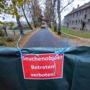 Russland schlägt Alarm! Geflügelpest erstmals beim Menschen nachgewiesen (Foto)