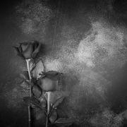 Musikwelt in tiefer Trauer! Rocklegende (71) gestorben (Foto)