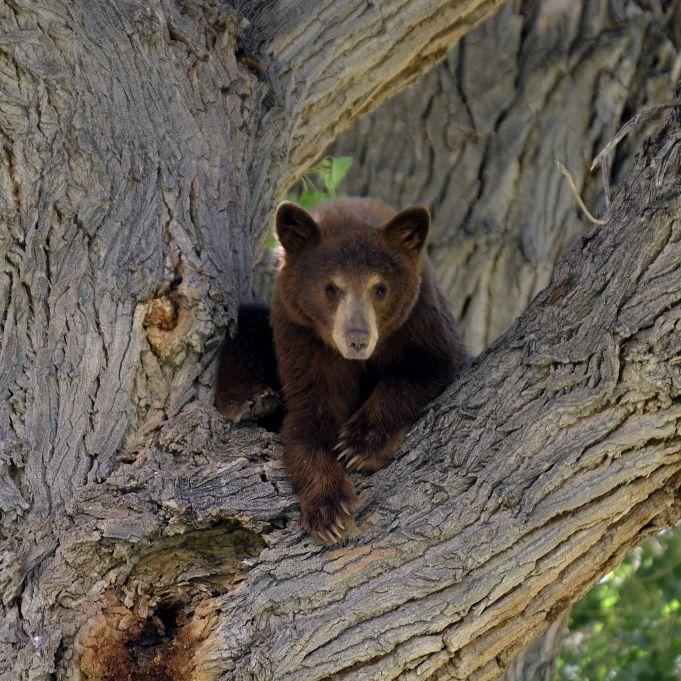 Bär beißt Frau beim Outdoor-Pinkeln (Foto)