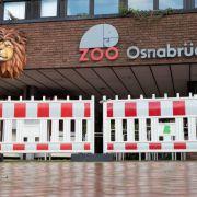 Löwe greift Tierpflegerin an - Opfer (25) im Krankenhaus (Foto)