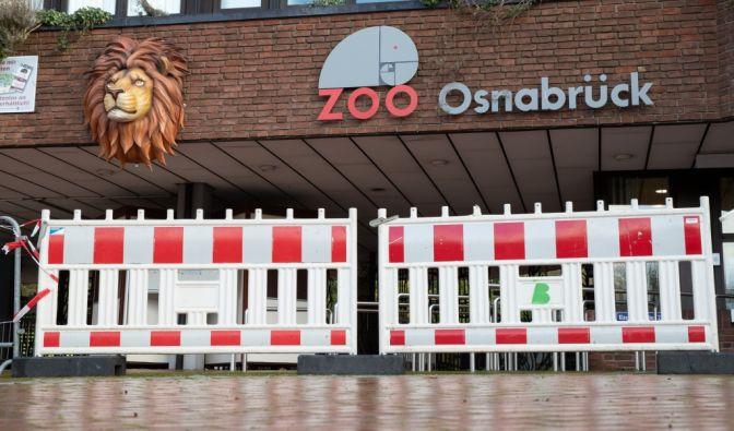 Löwen-Attacke im Zoo Osnabrück