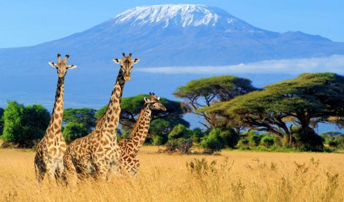 Tragischer Tod in Kenia