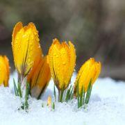 Kaltfront rollt an! Meteorologen warnen vor spätem Wintereinbruch (Foto)
