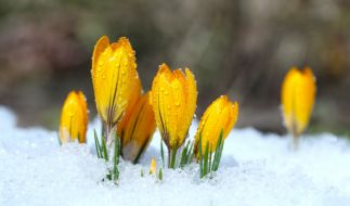 Kehrt der Winter noch einmal zurück? (Foto)