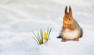 Wie wird das Wetter im ersten Frühlingsmonat? (Foto)