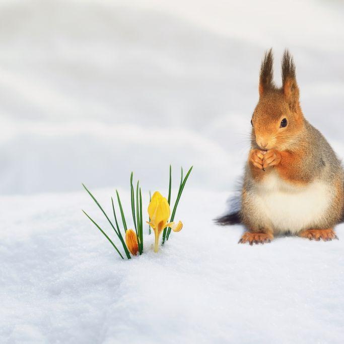 Winter-Horror im März? DIESES Wetter prophezeit der 100-jährige Kalender (Foto)