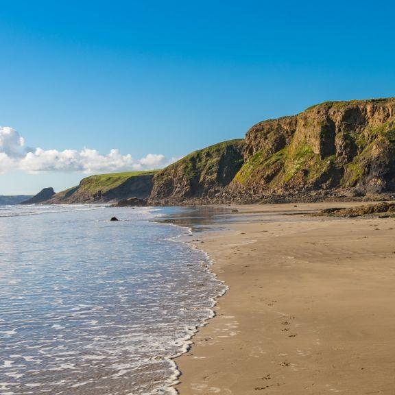 Gigantisches Seemonster an Strand gespült - Biologen ratlos (Foto)