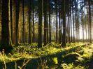 """""""Unsere Wälder"""" am Donnerstag verpasst?"""